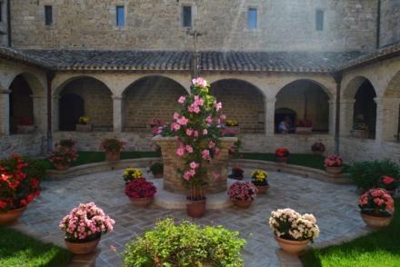 Wirydarz w San Damiano